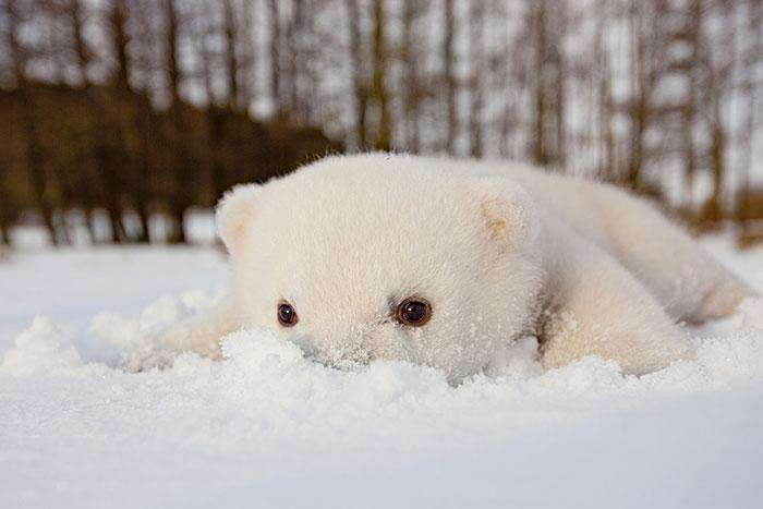 3-animals-and-first-snow-baby-polar-bear__700