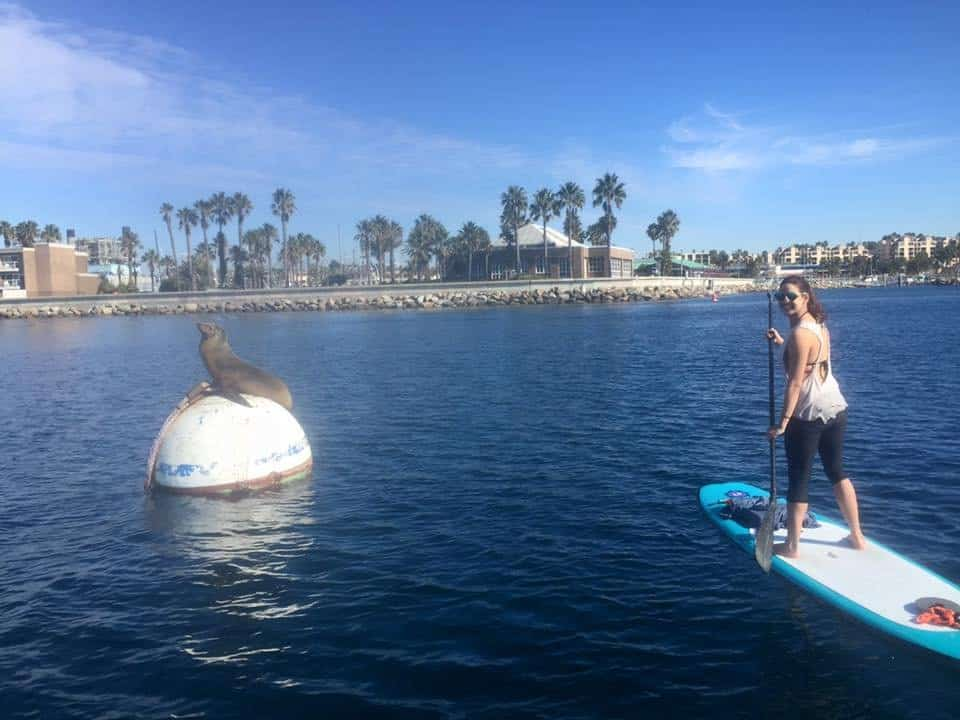 Seal Watching on LS Paddleboards