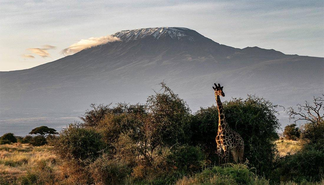 Climbing Kilimanjaro: Complete Guide To Unforgettable Hiking