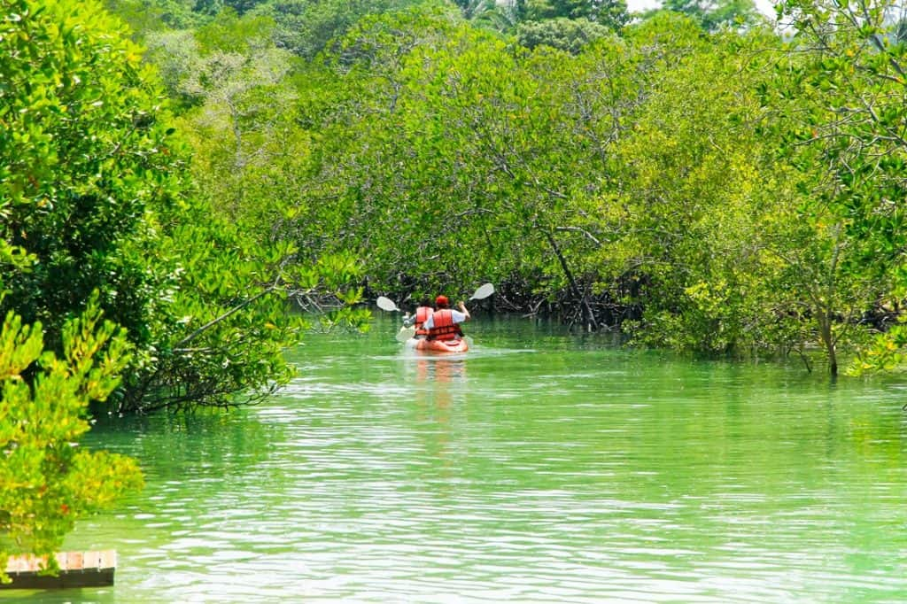 Best Ideas for Kayaking Florida Keys