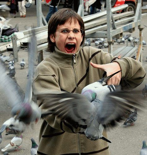 Bird attacks on humans are growing more common as people continue to encroach on bird nesting territory, wildlife experts warn. 11 Birds Attack Ideas Bird Attack Funny Pictures Attack