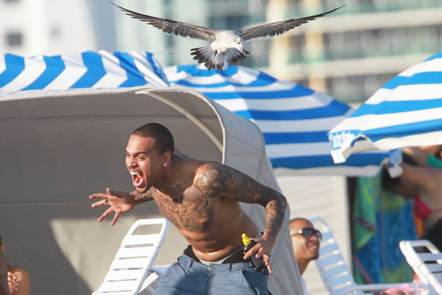 Mary heiman was walking her dog around a lake in downtown denver. Chris Brown Seagull Attack Caught On Camera