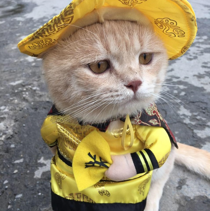 Vietnamese Cat Named 'Dog' Sells Fish While Wearing Cute ...