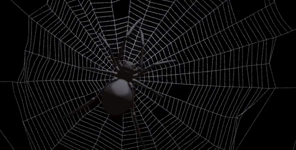 Black Spider On Web Free Download