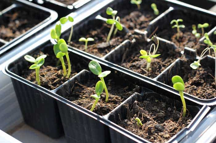 Grow Food from Seeds