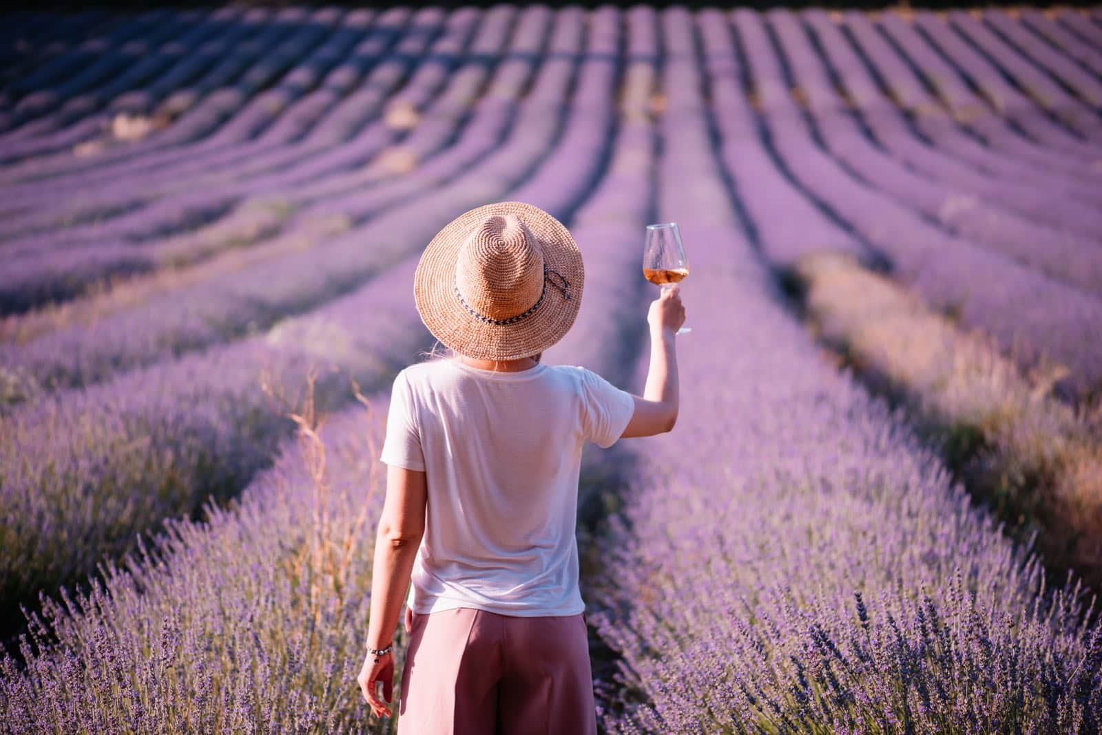 OuiPlease Provence France Vineyard