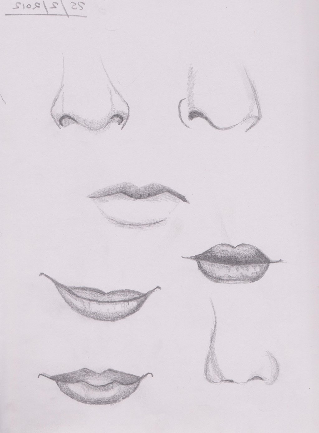 Nose Pencil Drawing At Paintingvalley Com Explore Collection Of