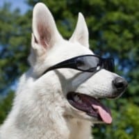 Profile picture of petworldglobal.com