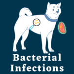 Pet Bacterial Infections treatments