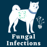 Pet Fungal Infections treatment