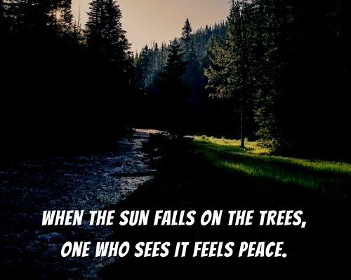 john muir quotes about trees