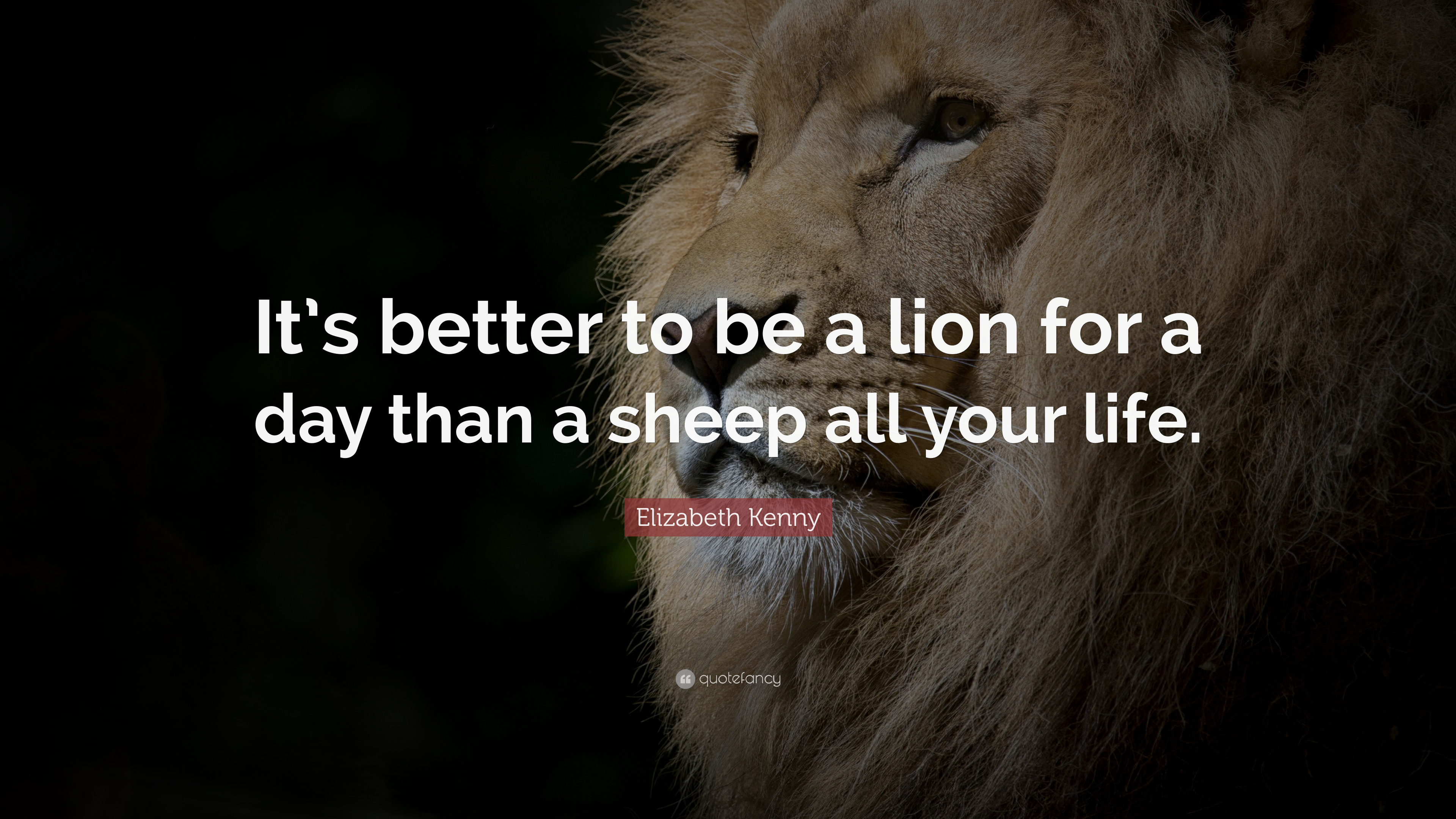 Quotes On Lion 2