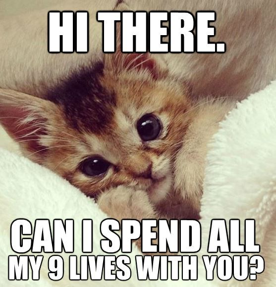 Top 30 Funny Animal Quotes And Pics Quotes And Humor