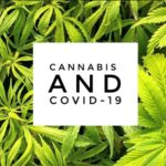 covid 19 and cannabis