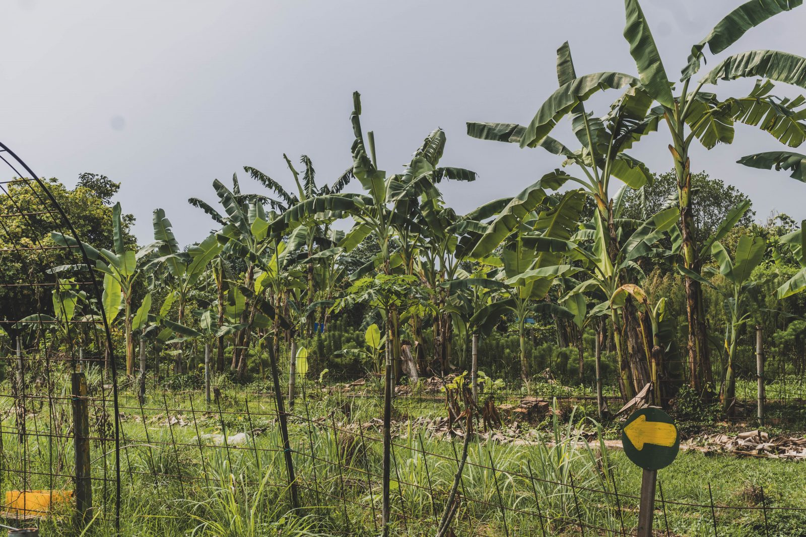 Maximising land use for farming and education purposes