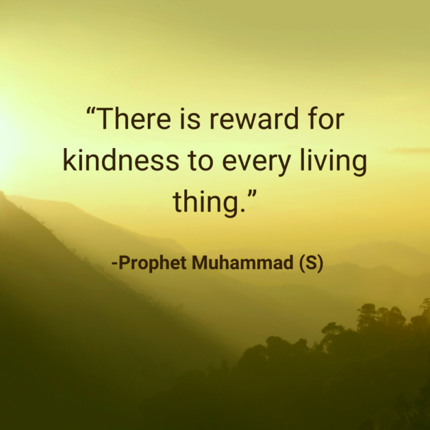 There is reward for kindness to every living thing. -Prophet Muhammad (S)