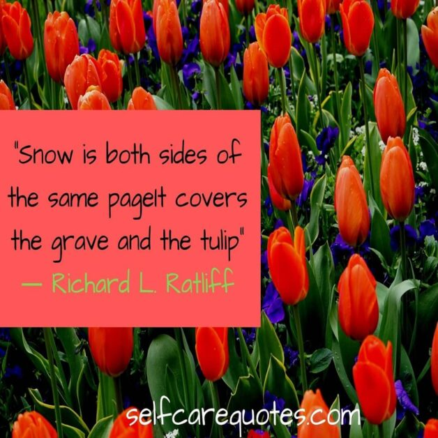 Snow is both sides of the same page It covers the grave and the tulip -Richard L. Ratliff