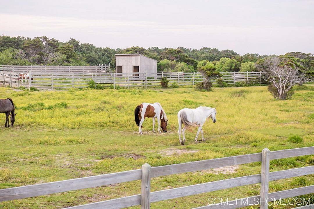 Essential First Visit Guide for Ocracoke Island on Sometimes Home travel website.