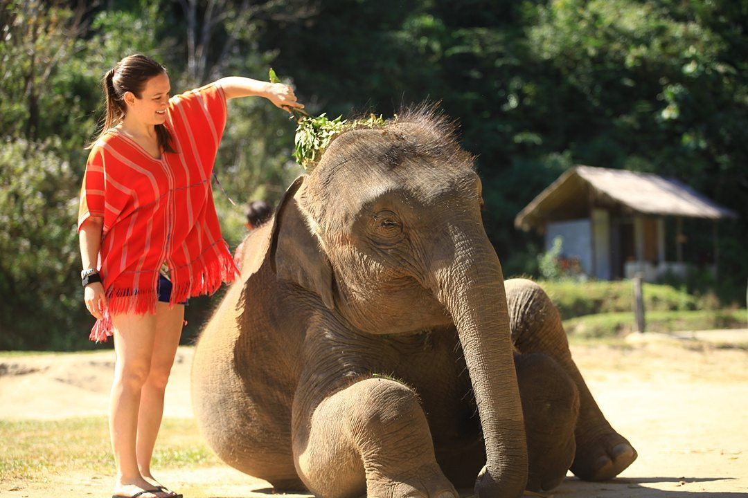 Vital FAQs Answered About Patara Elephant Farm in Chiang Mai. Information by Sometimes Home travel blog. A photo participating in Elephant Owner for a Day including cleaning the animals.