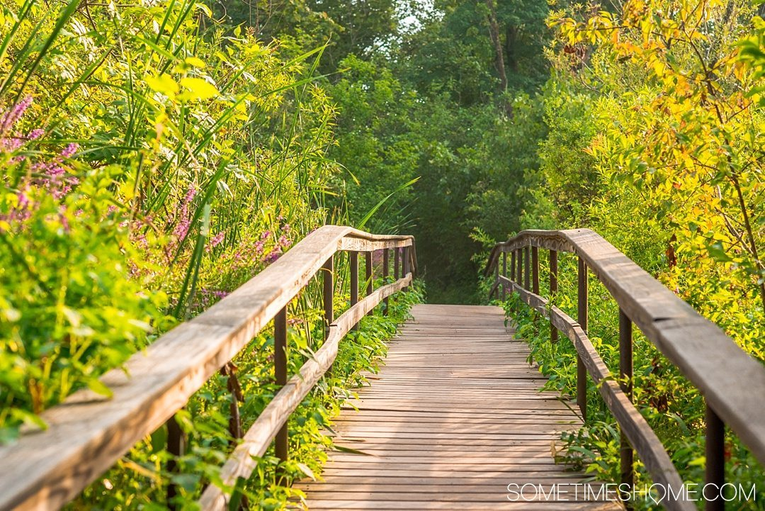 Your Complete Guide to Saugerties, New York on Sometimes Home travel blog. Photo of the bridge on the walk to the Saugerties Lighthouse.