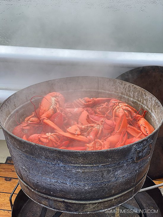 Pot of steamed, fresh lobster on a Maine Windjammer cruise experience.