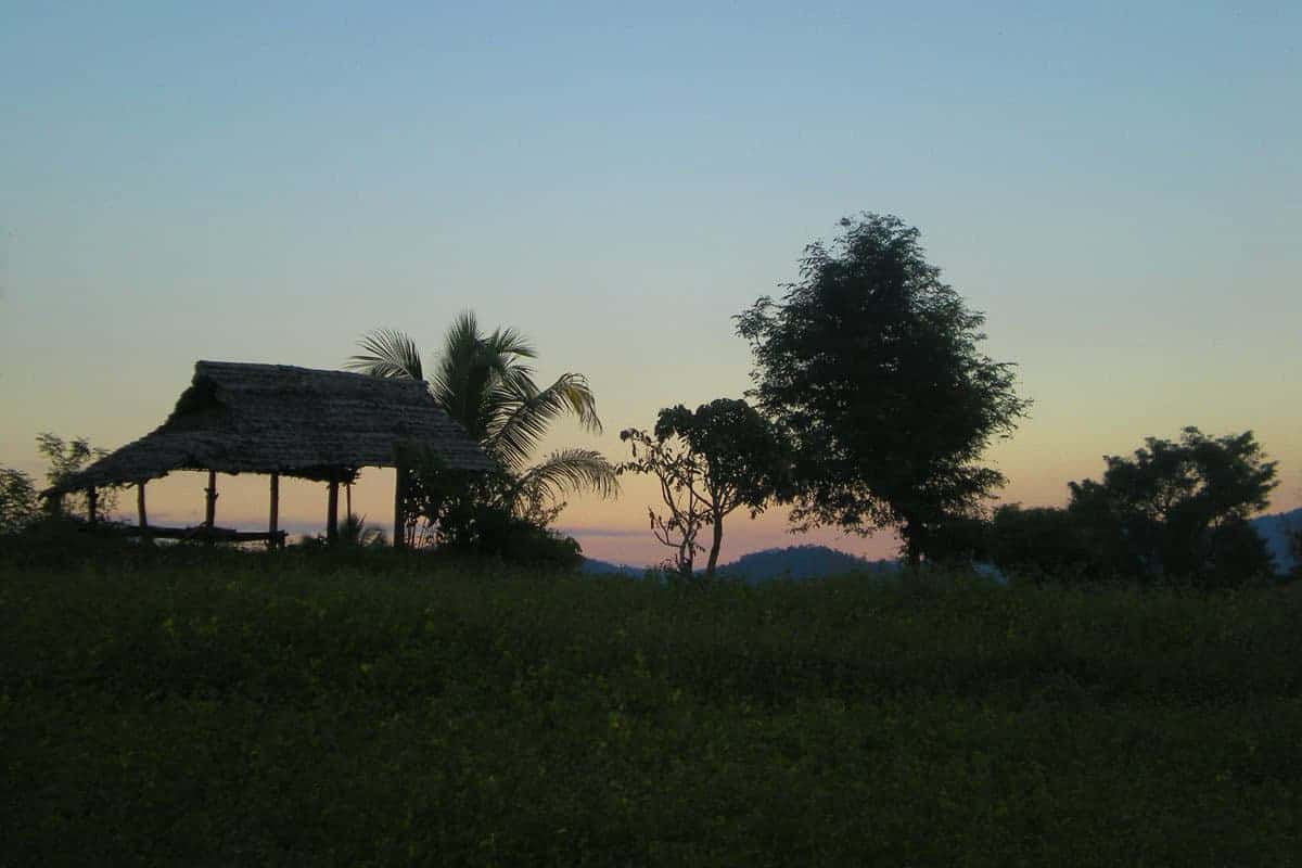 A shot across rice paddies at dusk in Isaan