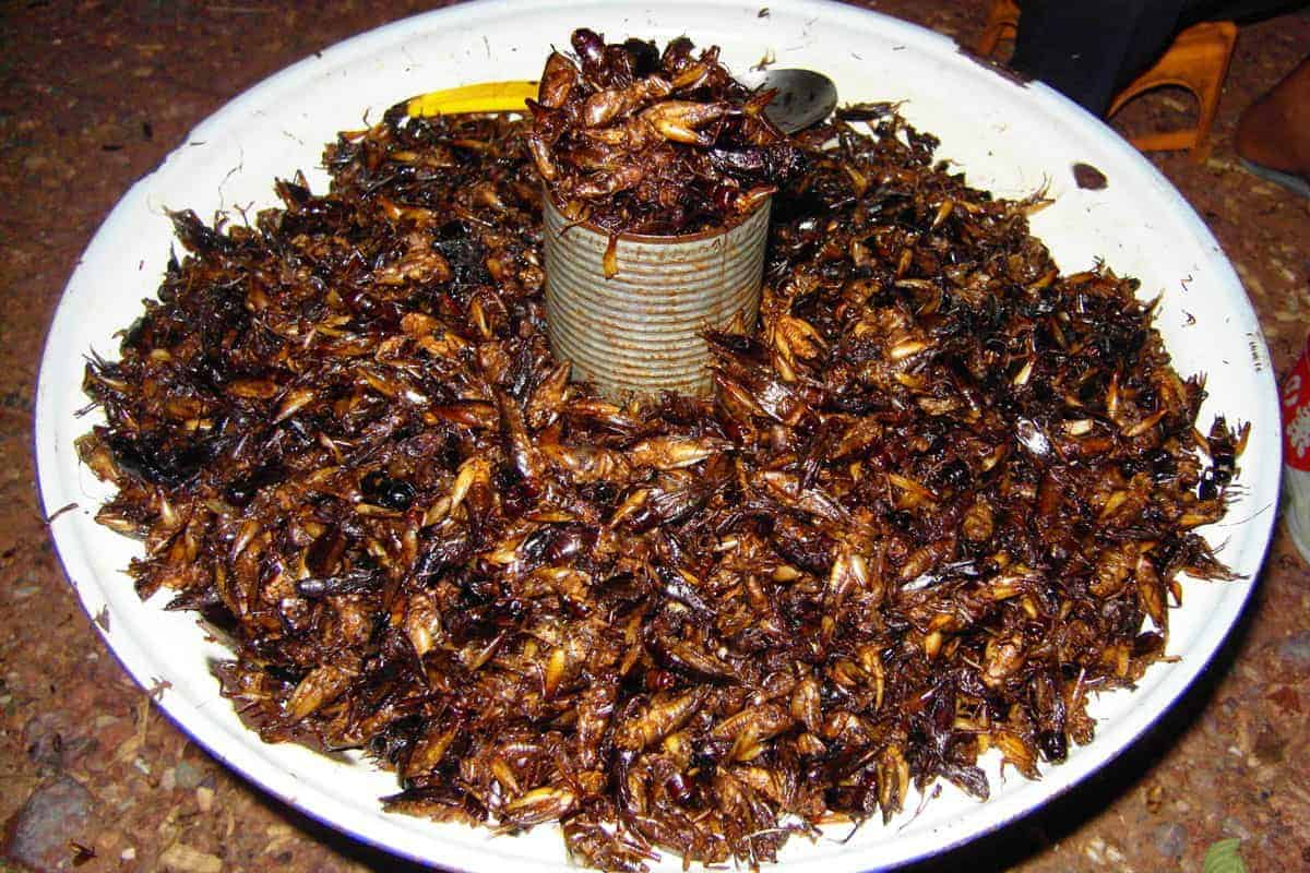 Crickets and grasshoppers fried