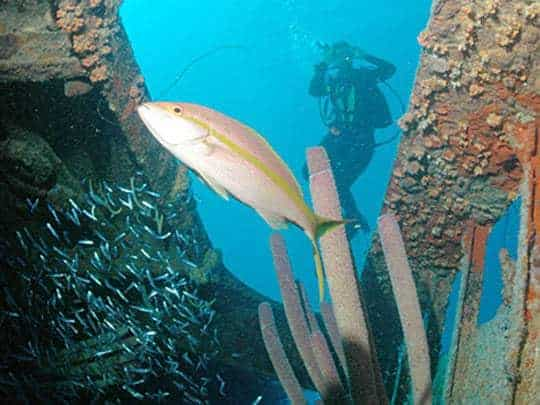 A Scuba Diver In The Background And Fish In The Foreground in Coron