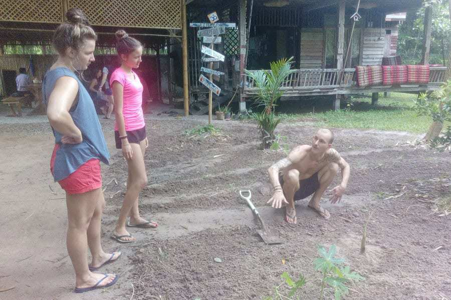Ian teaches two volunteers at Suan Sati how to plant mulberry trees.