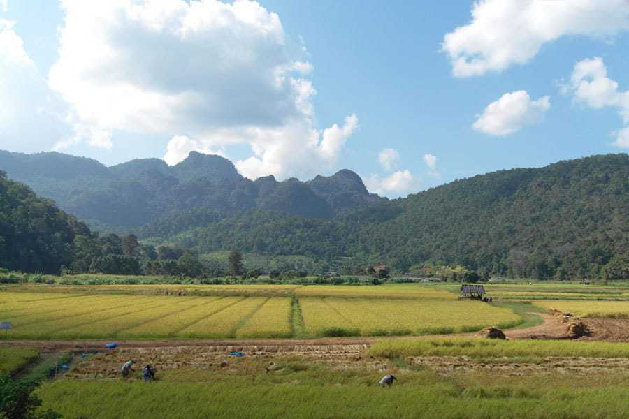 Rice fields and mountains - Amazing views on the way from Mae Hong Son to Pai.