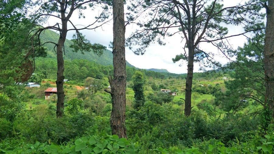 The lovely pine forests and hills around Kalaw, Myanmar.