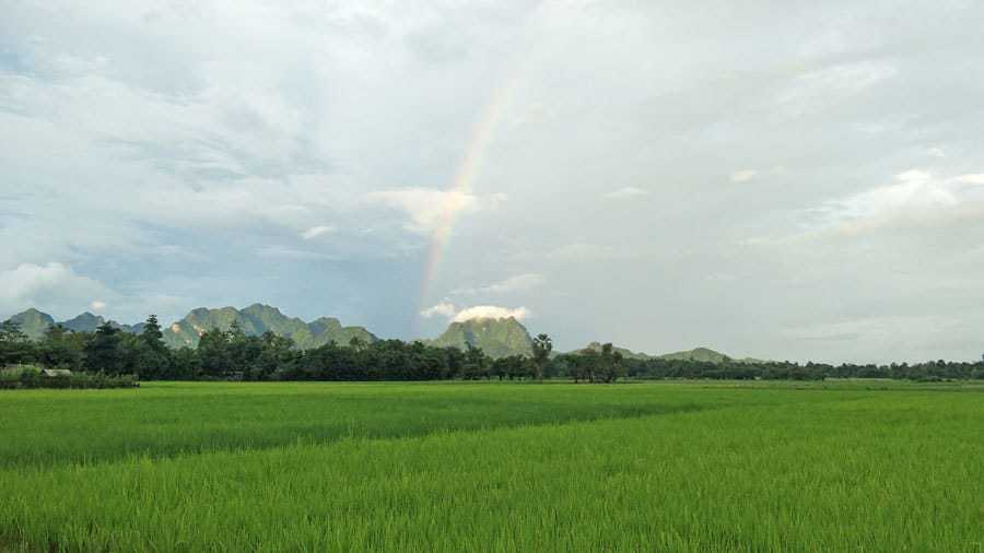 Rice-fields-of-Hpa-An-Myanmar