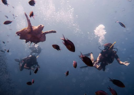 Swimming with turtles in Koh Tao!
