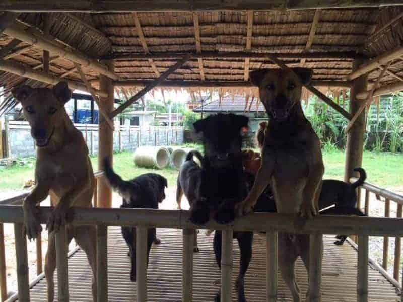 Happy Dogs, Koh Chang.