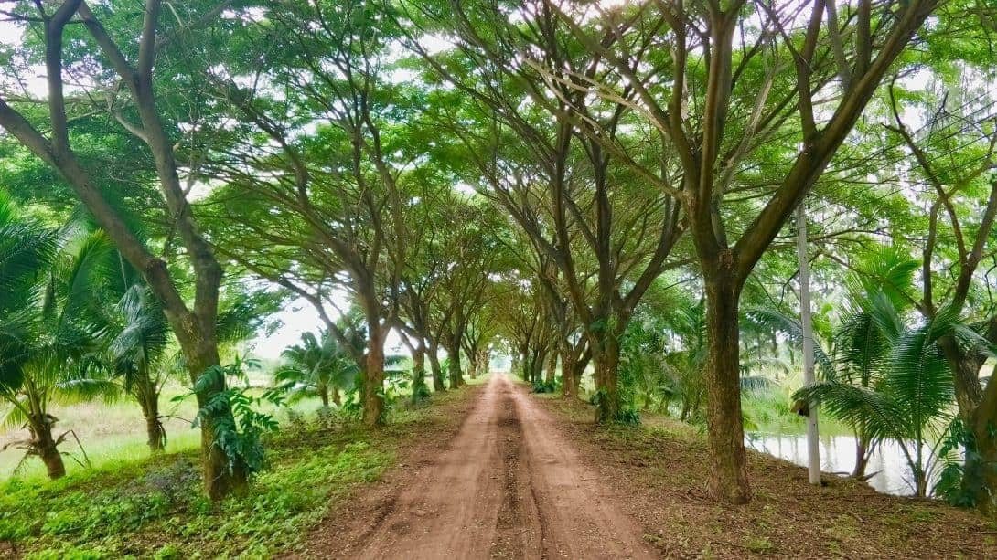 The tree lined driveway of Rak Tamachat, Thailand