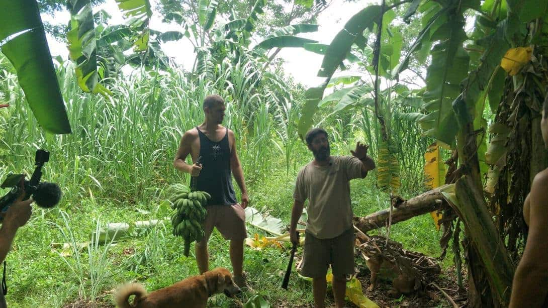 Learning how to propagate banana trees on a Permaculture Design Course