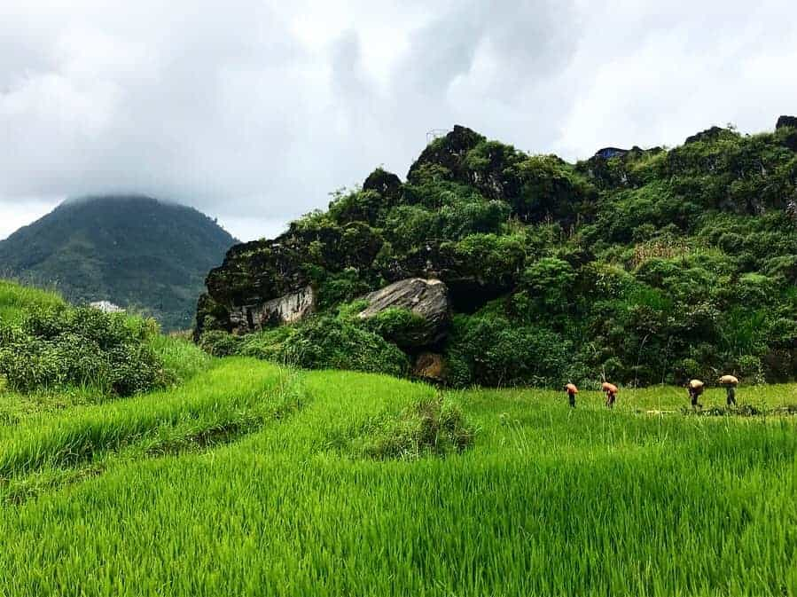 Four Local People Working On The Rice Paddies