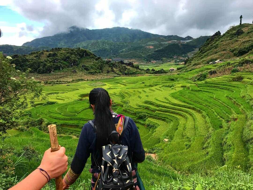 The View Across Luscious Green Rice Terraces With The Back Of The Sapa Trekking Tour Guide's Head In The Foreground