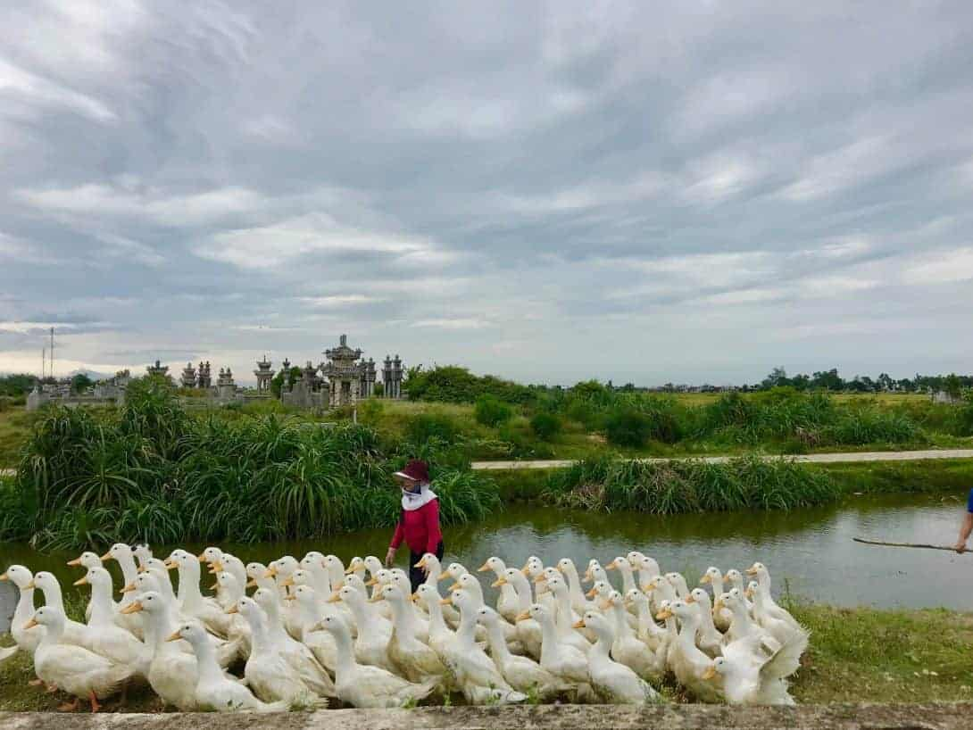 Duck farm with an elaborate graveyard in the background Hue Vietnam