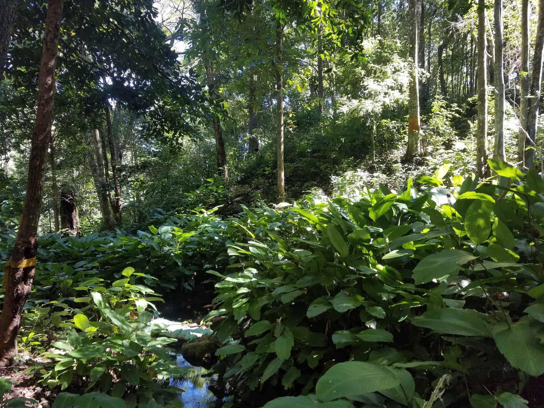 Streams and creeks snaking through verdant forests in Doi Inthanon National Park