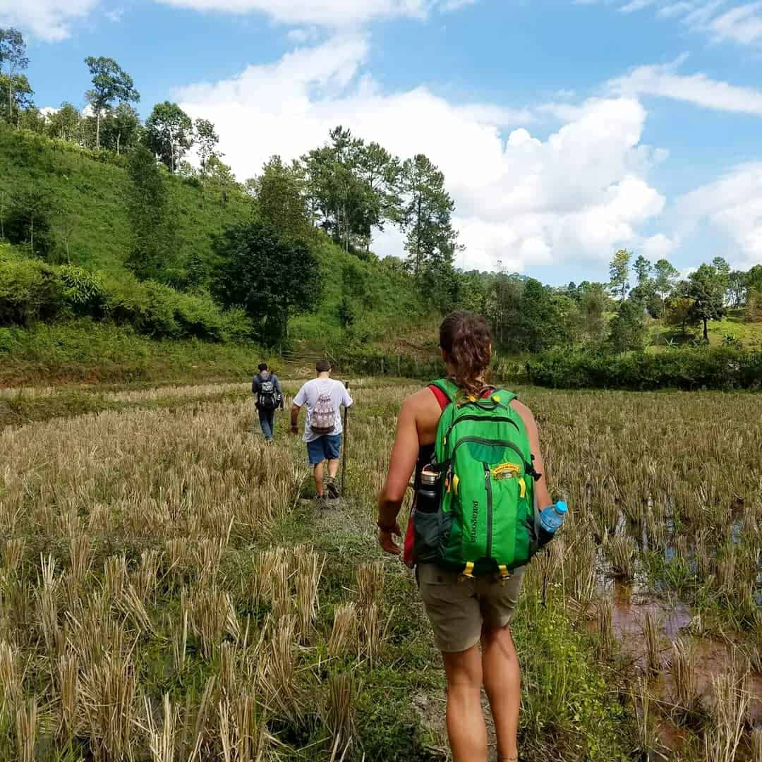 Backpackers crossing rice paddies in Inthanon National Park