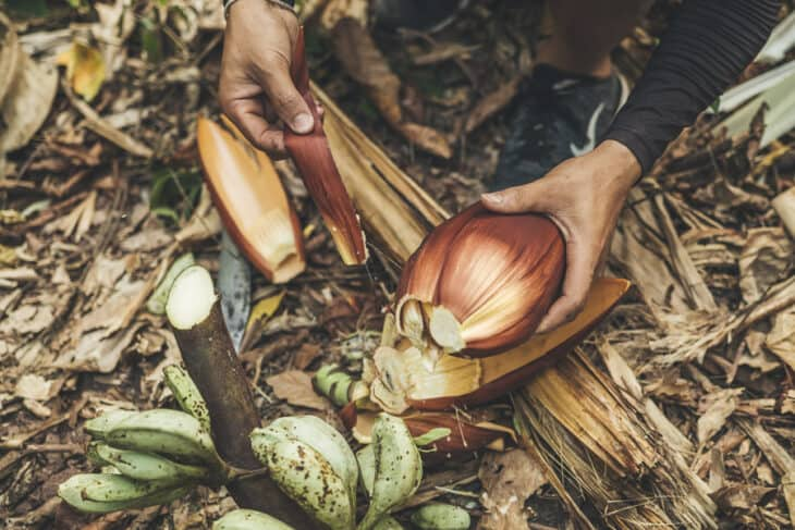 Collecting Banana Flowers for Soup