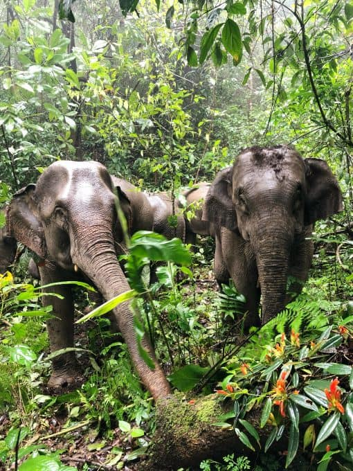 Two Elephants in the Jungle at Never Forget