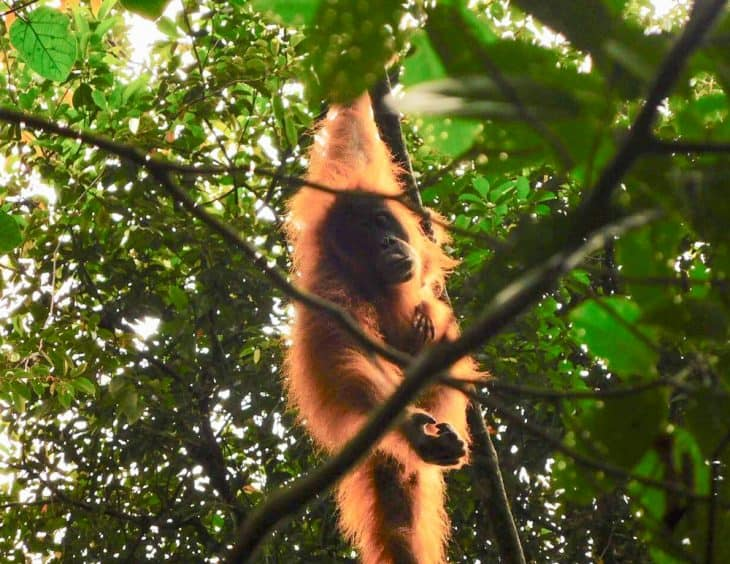 A Guide to Sustainable Jungle Trekking in Bukit Lawang