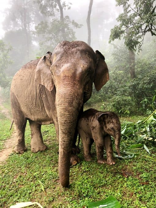 A Baby Elephant With its Mother