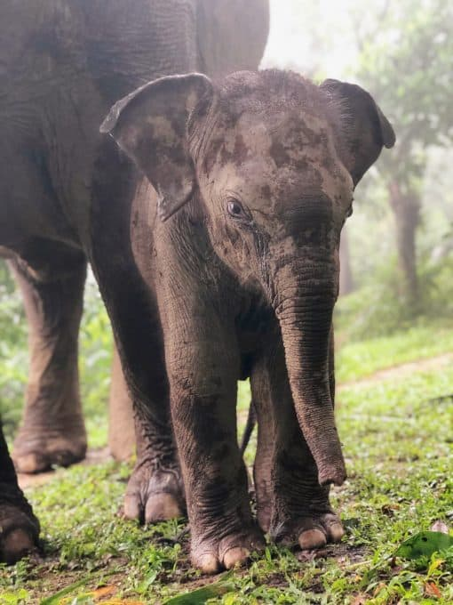 A Baby Elephant at Never Forget