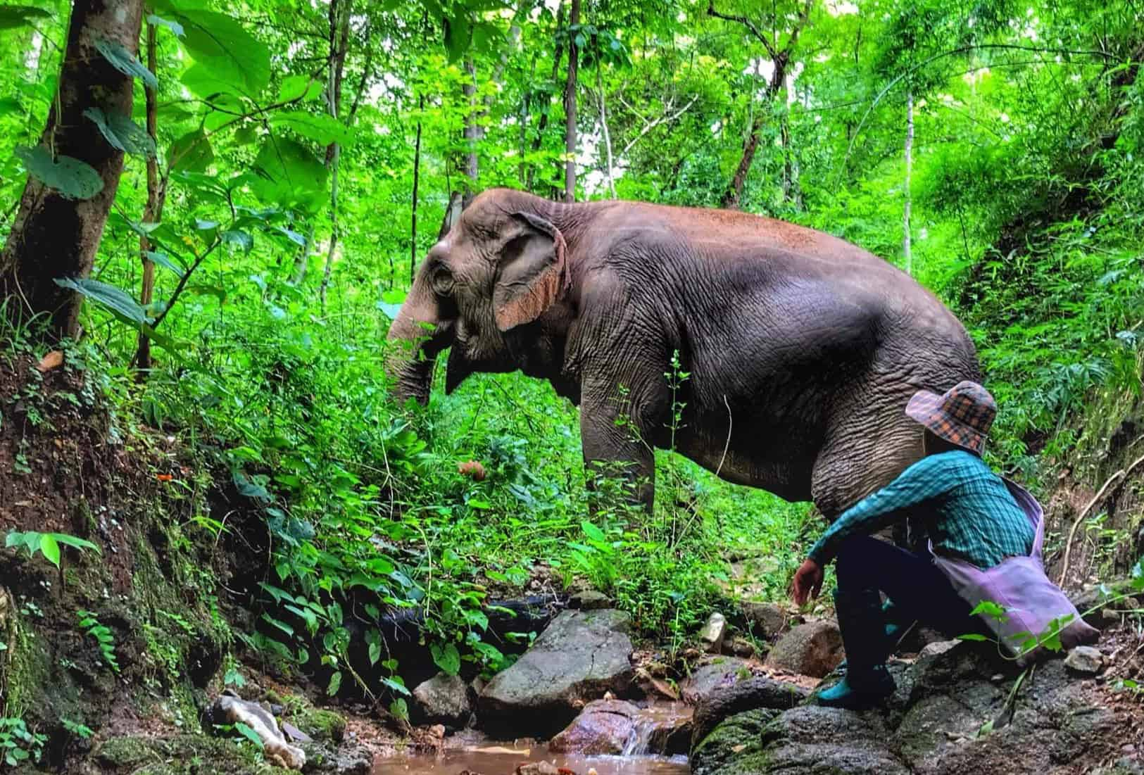 Observing elephants in the forest at BEES Elephant Sanctuary.