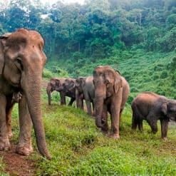 Elephant Conservation Experience | 2 Days - 1 Week | From LUANG PRABANG, LAOS