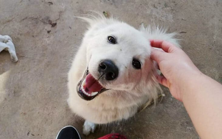 Happy dog being petted