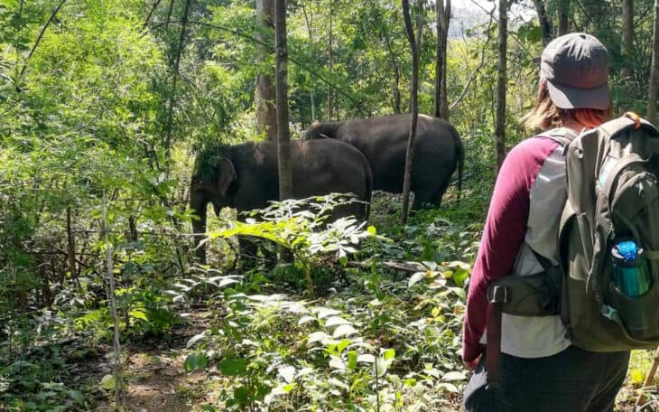 Man looks at elephants in jungle